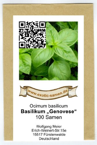 Ocimum basilicum - Basilikum