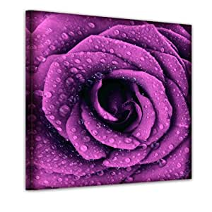 """Bilderdepot24 Bild auf Leinwand """"porpora Rose con gocce d'acqua"""" - 100x100 cm - incorniciato direttamente dal produttore, intelaiata e pronta da appendere"""