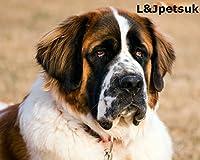 NEW Panier en fil métal Muselière pour chien Saint Bernard, et autres gros chiens