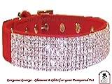 Designer Rot Samt mit Hundehalsband Größe 40,6cm-20