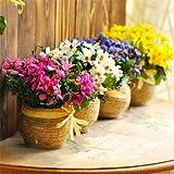 Viola: Saldi!100 semi di Argyranthemum Frutescens Marguerite Daisy Seeds Semi di fiori, così belli, fioritura lunga