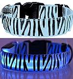 LEUCHTENDES Hunde-Halsband, Größe: S (35-43cm / 2,5cm breit), BLAU Zebra-Design, mit Klickverschluß. LED's leuchten und blinken im Dunkeln.
