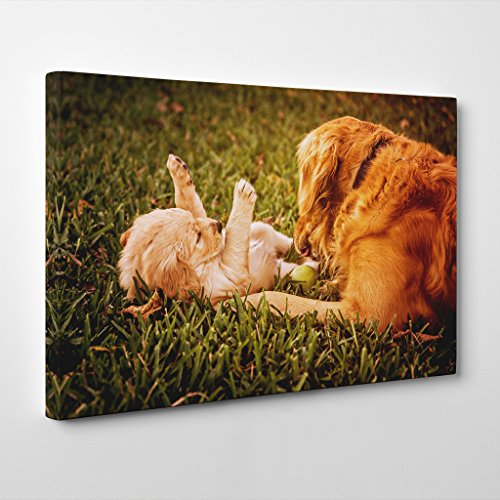 BIG Arty Pie Golden Retriever Dog and Puppy Canvas Wall Picture Ready to Hang, Multi-Colour, 20 x 14-Inch