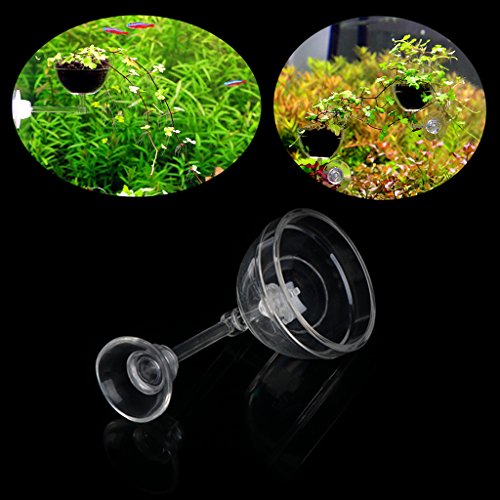 Mini pecera cristal acuático plantar cilíndricas