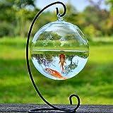 Zum Aufhängen Glas Vase Aquarium, Das transparent Sphärische Fischglas (inklusive der Ständer + Schale Glas)