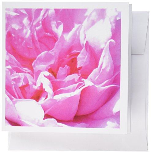 3dRose Gc_112958_2 Blumen-Blütenblätter aus der Nahaufnahme mit Rosenpfingstrose, abstrakte Falten, 15 x 15 cm, 12 Stück Adams Loafer