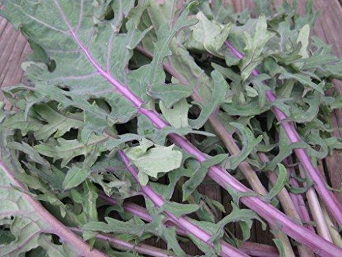 300+ GRAINES RED RUSSE kale CHOUX non-OGM biologique Jardin Printemps/Automne VENTE
