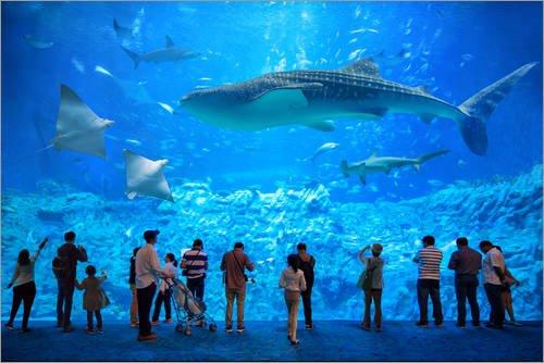 Posterlounge Acrylglasbild 180 x 120 cm: Großes Aquarium mit Haien, Mantarochen und Walhai von Jan Christopher Becke - Wandbild, Acryl Glasbild, Druck auf Acryl Glas Bild