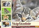 Putzige Katzenkinder. Drollige Kätzchen entdecken die Welt! (Wandkalender 2020 DIN A2 quer): Winzige Freigänger auf Entdeckungsreise! (Monatskalender, 14 Seiten ) (CALVENDO Tiere)
