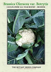 Brassica Oleracea var. Botrytis 'All Year Round' (250) Graines - Chou-fleur 'All Year Round' Semences [Cauliflower 'All Year Round']