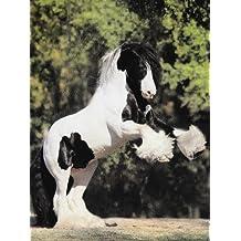 Fotoagenda Pferde 2010: Ein Terminplaner für Ihre Termine&Notizen