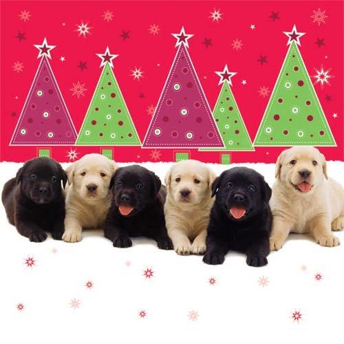 weihnachtskarte-twas-the-night-before-christmas-welpen