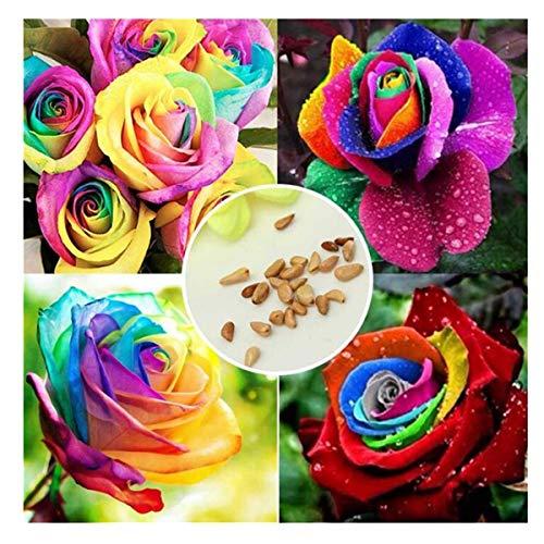 200 pz/borsa arcobaleno semi di rose colore rosa seme famiglia giardino decorazione