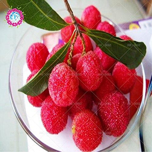10 pièces / sac Arbutus unedo graines Strawberry Delicious Seeds rouge Bayberry fruits chinois pour la santé et jardin facile à cultiver
