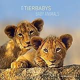 Tierbabys 2018 - Animal Babys - Broschürenkalender (30 x 60 geöffnet) - Tierkalender - Wandplaner