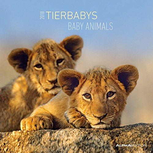 Tierbabys 2018 Broschürenkalender