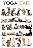 Comic Yoga Katzen schild aus blech, metal sign, tin