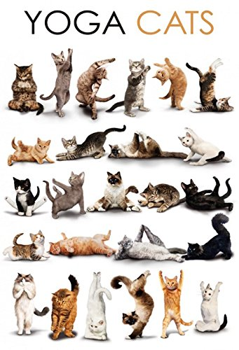 Comic Yoga Katzen schild aus blech, metal sign, tin