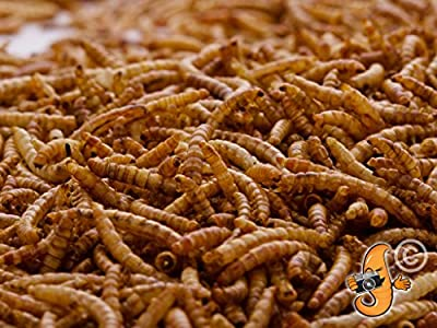 Chubby Mealworms Dried Mealworms, 3 Litre from UKPetSupplies Ltd