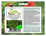Stk - 20x Azadirachta Indica Niembaum Niem Neem Margosa Samen ID32 - Seeds Plants Shop Samenbank Pfullingen Patrik Ipsa