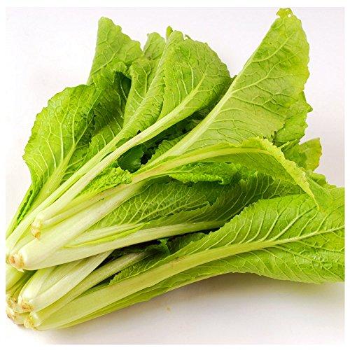 pak-choi-bok-choy-col-de-chine-seeds-graines-de-vegetaux-organiques-sains-pour-le-jardin-de-sa-maiso