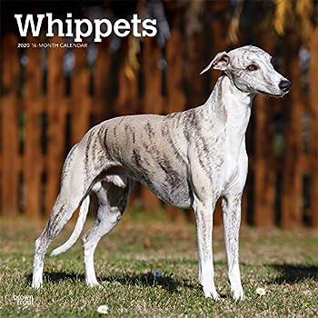 Whippets 2020 Calendar