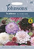 Johnsons UK/JO/FL Scabious Tall Double Mixed