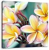 Monoi Blüten auf Hawaii, Format: 40x40 auf Leinwand, XXL riesige Bilder fertig gerahmt mit Keilrahmen, Kunstdruck auf Wandbild mit Rahmen, günstiger als Gemälde oder Ölbild, kein Poster oder Plakat