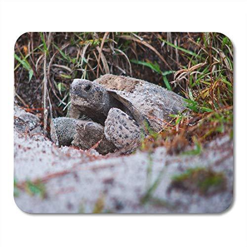 Mauspads Nest-Makro-Gopher-Schildkröte-Florida-Natur-Reptil-Tier-Mausunterlage für Notizbücher, Tischrechnermatten Bürozubehöre -