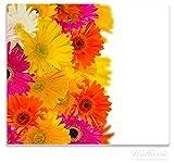 Wallario Herdabdeckplatte / Spitzschutz aus Glas, 1-teilig, 60x52cm, für Ceran- und Induktionsherde, Bunte Gerberas vor weißem Hintergrund - pinke, gelbe, rote und weiße Blüten