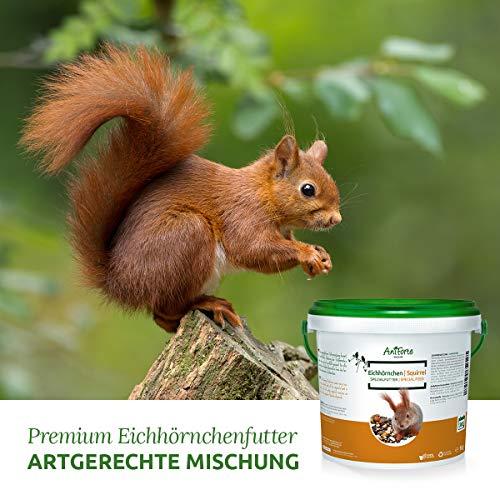 AniForte Wildlife Premium Eichhörnchenfutter 1 kg für Eichhörnchen und Streifenhörnchen – Naturprodukt Mischung, Besondere und artgerechte Eichhörnchen Fütterung – Unsere Spezial Futtermischung - 3