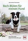 Bach-Blüten für meinen Hund: Wertvolle Helfer bei der Verhaltenstherapie