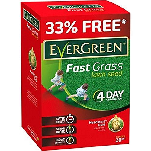 EverGreen, Sementi rapide per prato, 15m2+ 33% extra, 4giorni di germinazione, peso: 600g