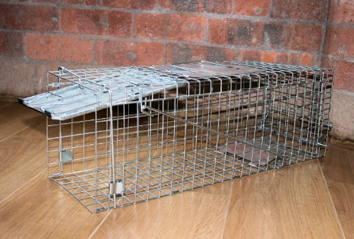Folding Grey Squirrel Mink Rodent Animal Trap-Folding écureuil gris vison des animaux Piège Rongeurs