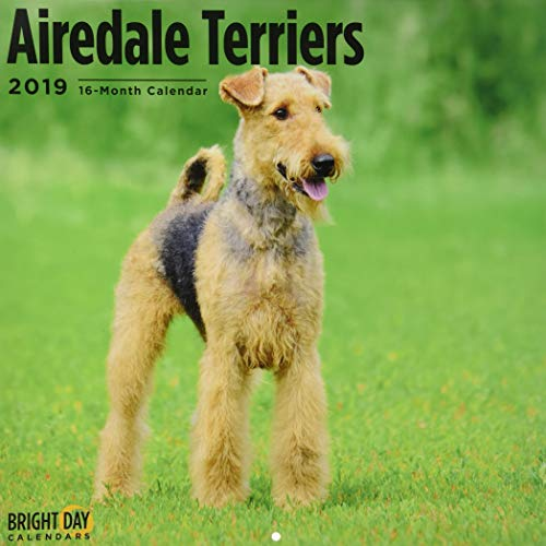 Airedale Terrier 2019 (BREEDS)