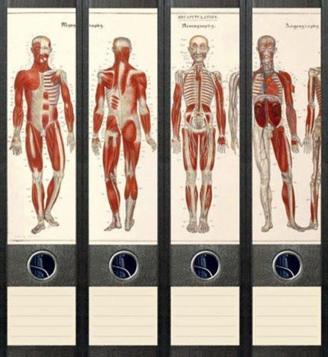 4er Set Ordnerrücken für breite Ordner Anatomie Skelett Aufkleber Etiketten Deko 034