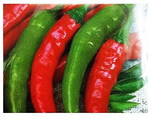 450 Aprox- Semillas de pimienta de maíz Calabrese Spicy Corneletto para colgar - Capsicum Annuum en paquete original Hecho en Italia - Pimientos picantes