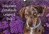 Lousiana Catahoula Leopard (Wandkalender 2020 DIN A3 quer)