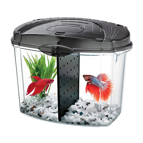 Aqueon Betta Bowl Aquarium-Set in schwarz (Gallone Kit 0.5)