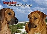 INDIGOS UG - Türschild FunSchild - SE645 - ACHTUNG Hund Ridgeback - für Käfig, Zwinger, Haustier, Tür, Tier, Aquarium - DIN A4 PVC 3mm stabil