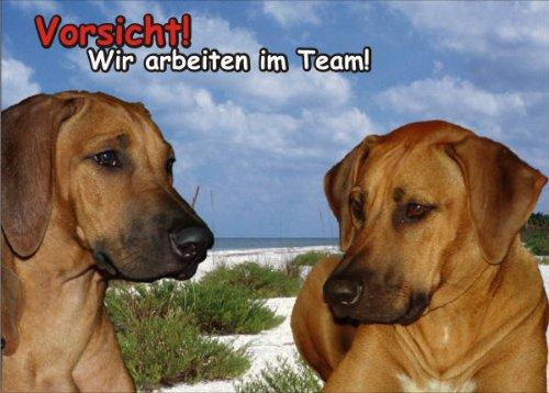 INDIGOS UG - Türschild FunSchild - SE645 DIN A5 laminiert ACHTUNG Hund Ridgeback - für Käfig, Zwinger, Haustier, Tür, Tier, - Tür Hund Garage