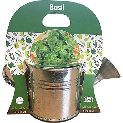 Générique Kit Plantation Arrosoir - avec Graines de Basilic à Cultiver