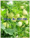 Go Garden 10Pcs Super Big Sweet Honey-Dew Melon Semillas Hami Melon Semillas Frutas Semillas Cantalupo Melón Jumbo Melón Herencia Suculentas Plantas: 6