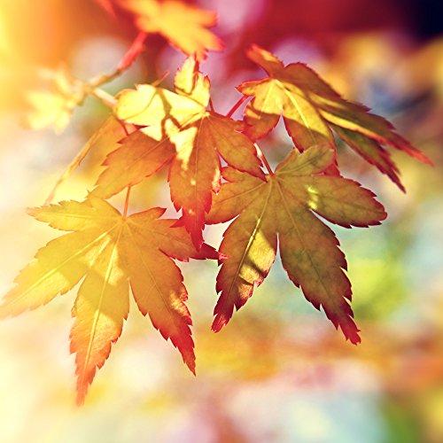 autumn-sunshine-fine-art-photographic-print