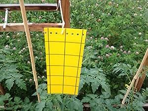 Eco Piège collant BIO - 01 à19 Piège pour insectes volants Pest-Jaune