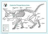Akupunktur-Tafel Katze: PraNeoHom Energiebalance durch Heilen mit Zeichen