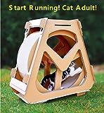 DIOPN Cat compagnie en carton ondulé chat escalade réservoir d 39 eau drôle chat jouet tapis de course pour animaux de compagnie tapis de course grande roue (diamant rond sans cadre 40 * 50cm)