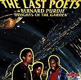 The Last Poets Reggae
