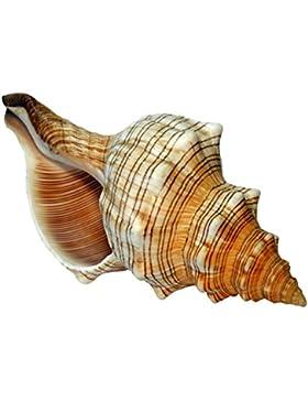 Kaltner Präsente Geschenkidee - Muschel Fasciolaria Trapezium Trapez Bandschnecke Meeresschnecke 18 cm groß