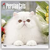 Persian Cats - Perserkatzen 2017-18-Monatskalender: Original BrownTrout-Kalender [Mehrsprachig] [Kalender] (Wall-Kalender)